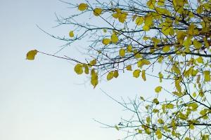 Herbst - Winter 2008/2009